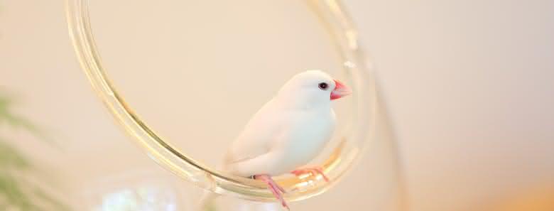 Cages Oiseaux