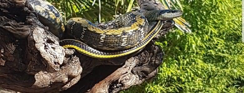 Arbres pour Reptiles