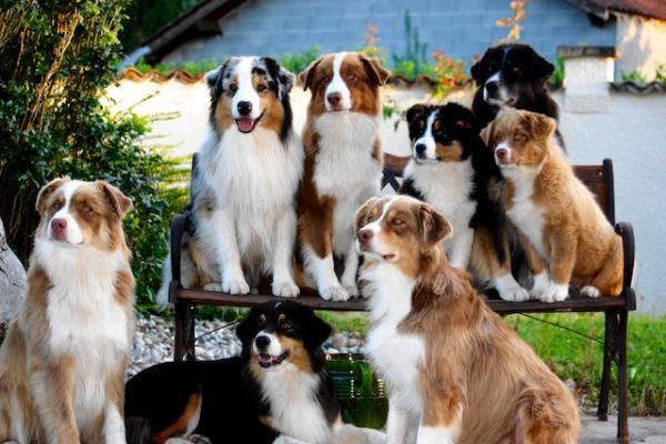 Top 5 des races de chiens préférées des français