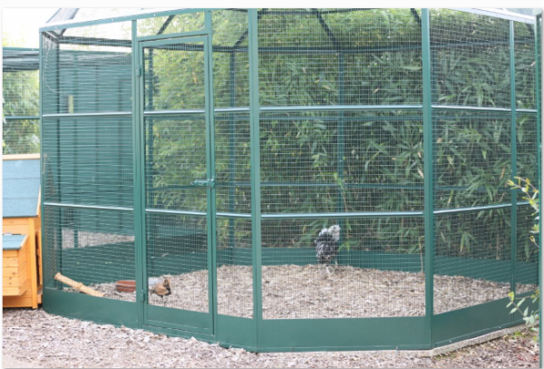 4 astuces d'aménagement pour vos poules