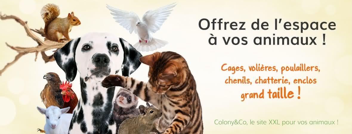 c-co-gen-1