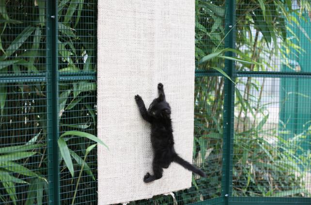 Aménagement enclos pour chat